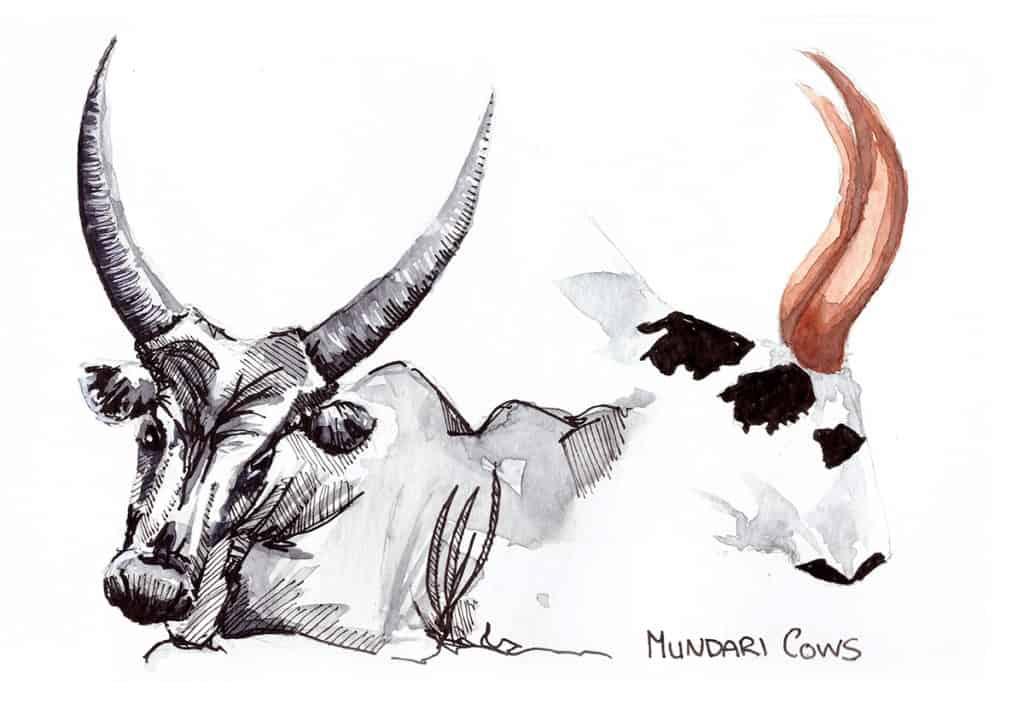 Mundari Cattle